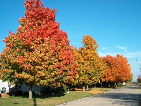 The changing of leaves can be so very pretty...
