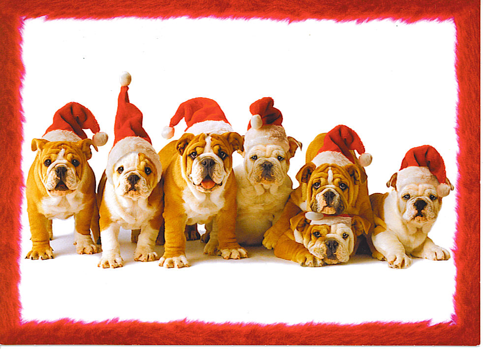 funny christmas bulldog - photo #6