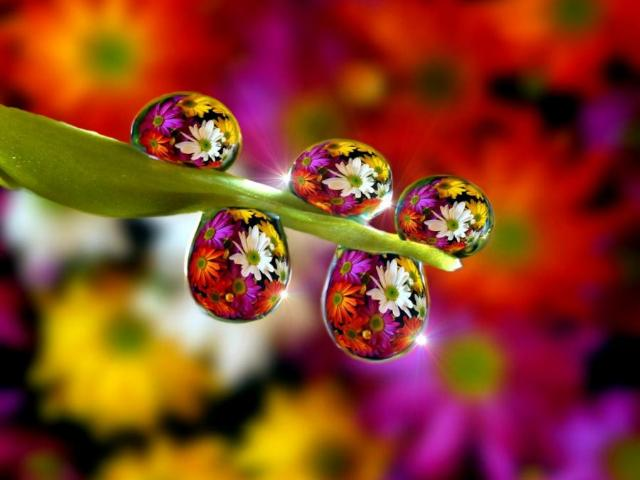 daisies nano5second