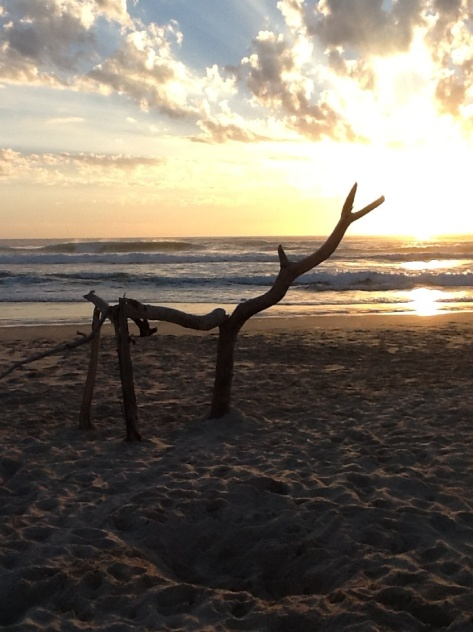 Reindeer on the beach?