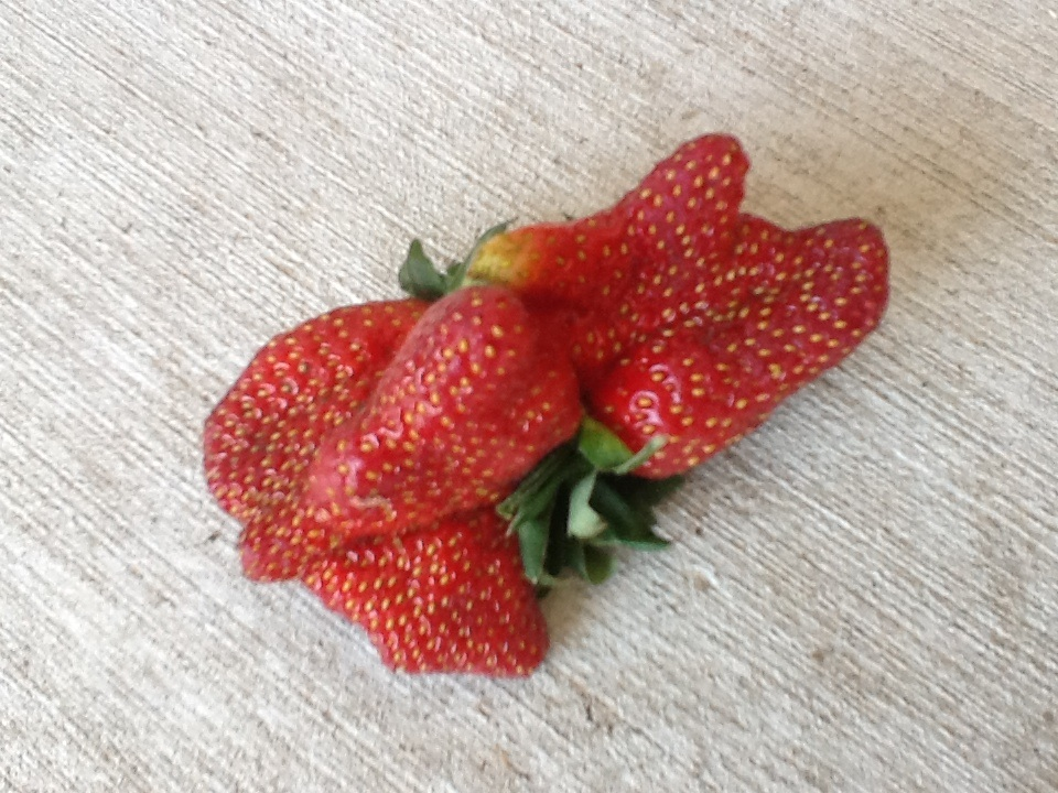 The strawberry-multiple. :)