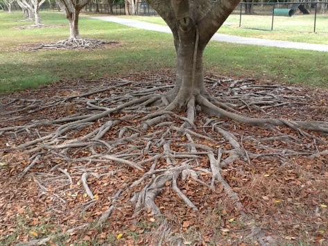 Ever-expanding roots. What an incredible design!
