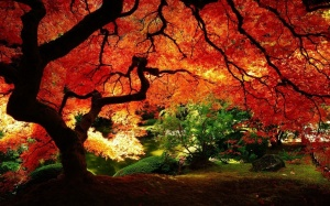 The maple tree - spectacular!  Photo by plantwerks.blogspot.com