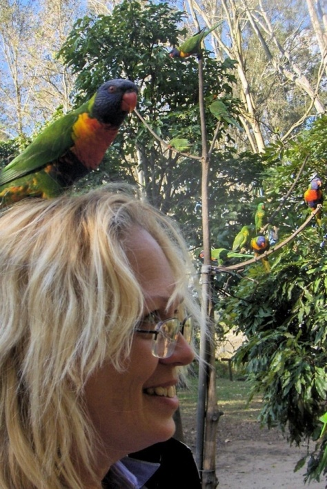 Heads up for Rainbow Lorikeets!! What's on your head, Kathy?!