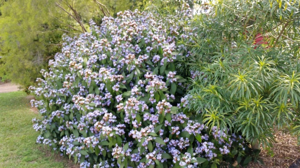 Flower Bush with Bees