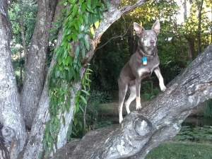 Pinky, the puppy in the videos, loves to climb trees. Isn't she beautiful?!