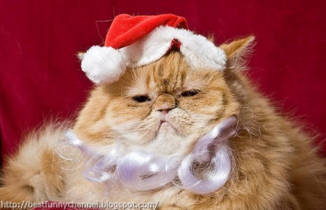 grrrrrr.......Who says Christmas has to be a good time.....