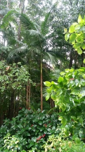 Beautiful Rainforest